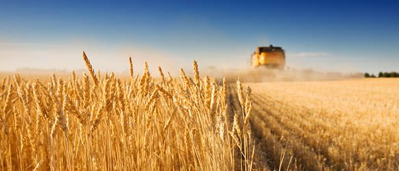 Ilyashev & Partners Advises GrainCorp Ltd in Ukraine