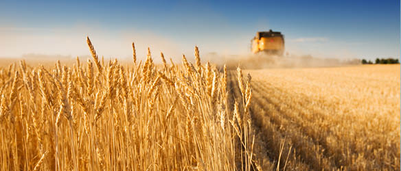 Asters Advises EBRD on Financing to Grain Alliance Group